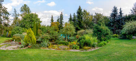 Photo for Beautiful fall garden, with evergreen conifer trees. Autumn gardening concept - Royalty Free Image