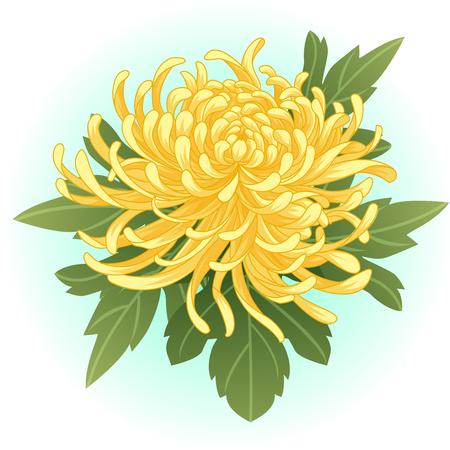 Illustration pour yellow chrysanthemum flower illustration - image libre de droit