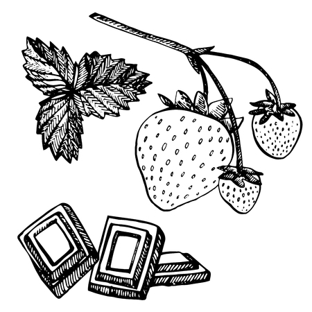 Illustration pour Strawberry vector illustration. Engraved style illustration. Sketched hand drawn berry, flowers, leafs and branches. - image libre de droit