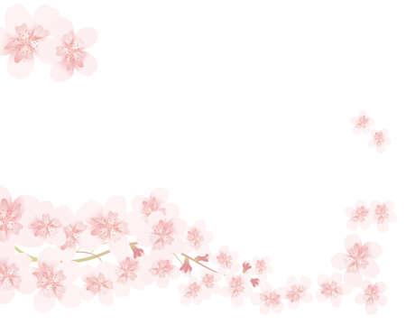 cherry blossom line