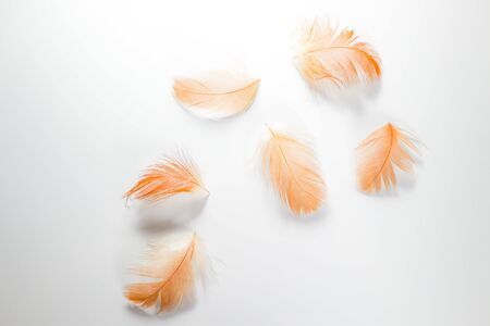 Photo pour Beautiful abstract close up color white brown and orange  feathers on white isolated background and wallpaper - image libre de droit