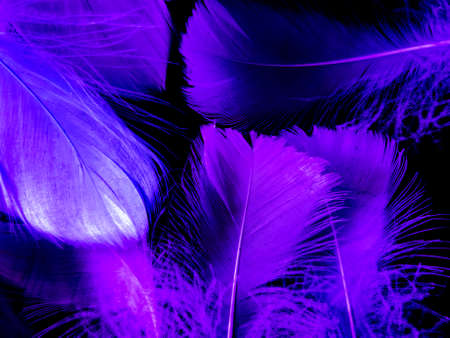 Photo pour Beautiful abstract purple feathers on dark background, blue feather texture on black pattern, purple background, colorful feather wallpaper, love valentines day, dark texture - image libre de droit
