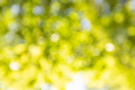 Spring background, green leaves on blurred background