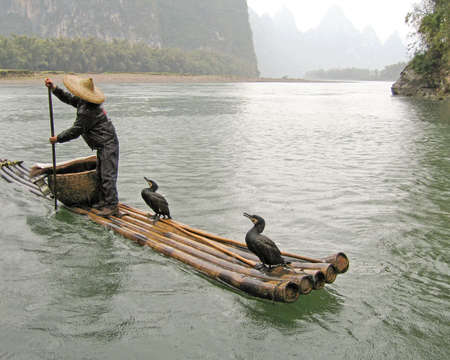 typical chinese fisherman rafting down the li river of guilin, china with his cormorants