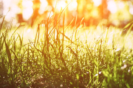 Photo for Fresh spring grass in the sunbeams. Close up. - Royalty Free Image