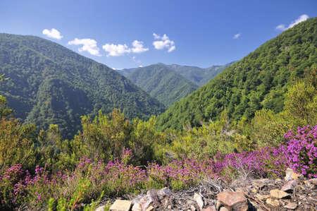 Forest Muniellos, Asturias, Spain.