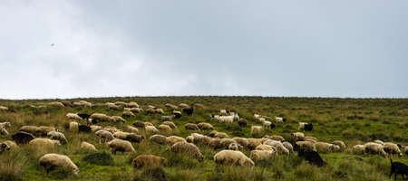 Foto de Rural road with sheeps  in Caucasus mountains in Georgia - Imagen libre de derechos