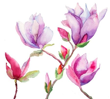 Photo for Beautiful Magnolia flowers, watercolor illustration - Royalty Free Image