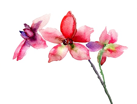 Pink orchids flowers, watercolor illustration