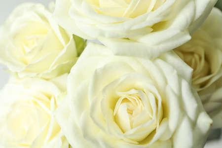 Photo pour Beautiful fresh white roses as background, closeup - image libre de droit