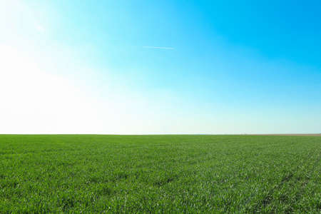 Photo pour Green grass field, space for text. Beautiful spring greenery - image libre de droit