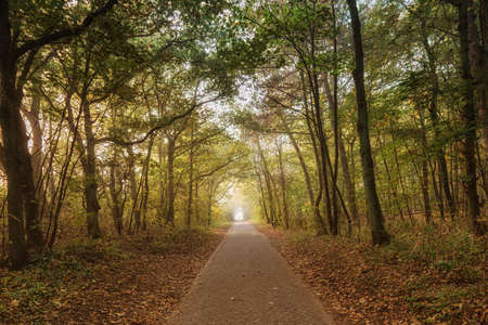Road path walkway through autumn forest.