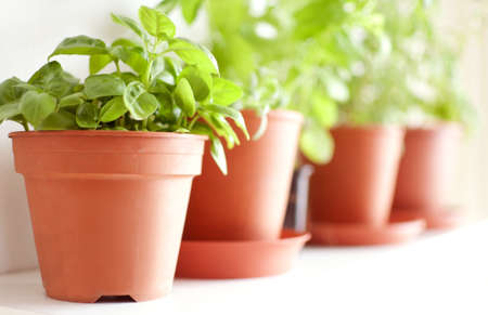 Herbs in Pots on the Shelf - Basil, Mint and Rosemary - Shallow Depth of Field
