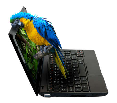 3D Netbook / Notebook With Parrot on the Screen - isolated on White