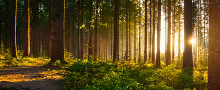 Photo pour Silent Forest in spring with beautiful bright sun rays - wanderlust - image libre de droit