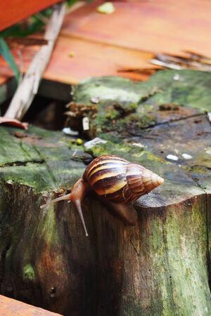 Snail crawling on stump