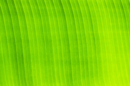 Photo for Green leaf background - Royalty Free Image