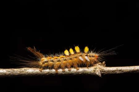 Macro worm on the plant.