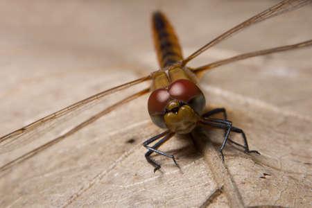 Macro dragonfly on leaf