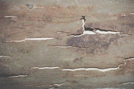 Foto de Background bark surface - Imagen libre de derechos