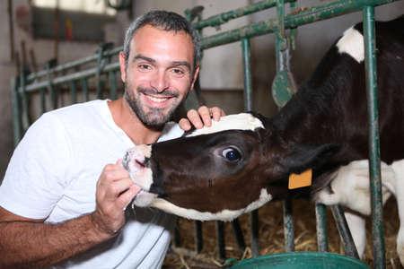 Farmer feeding a cow