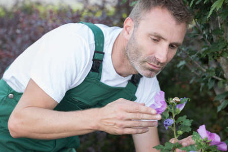 Photo pour man gardening outside in summer nature cutting roses - image libre de droit