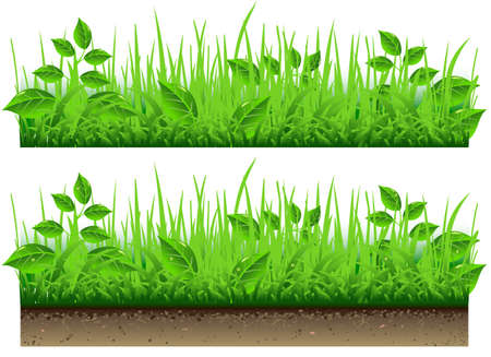 Detailed illustration of a Grass Border