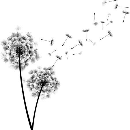 Illustration pour Dandelion Seeds - image libre de droit