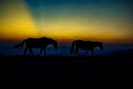 Photo pour horse walks to the horizon - image libre de droit