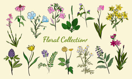 Illustration pour Hand drawn set of wildflowers and herbs. Sketch of summer flowers, herbs and leaves. Collection of meadow plants. Botanical illustration. Decorative elements for summer and spring desing. - image libre de droit