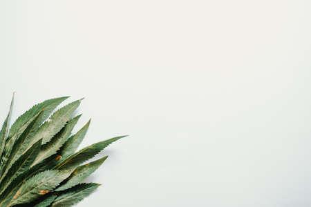 Foto de Some long green leaves over a white background - Imagen libre de derechos