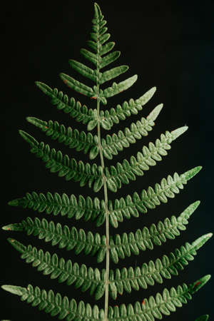 Photo pour Background made of a super close up of a fern - image libre de droit