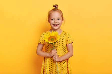 Photo pour Glad small girl with ginger hair knot, had walk at field during summer, picks up sunflower, wears yellow polka dot dress, smiles broadly, poses indoor, enjoys leisure time. Childhood concept - image libre de droit