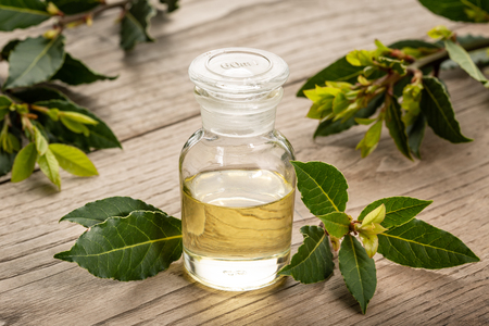 Photo for Bay laurel essential oil on wooden background. Bay oil on glass bottle . Laurus nobilis - Royalty Free Image