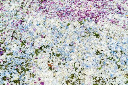 Photo pour Hydrangea flower petals background. Wedding backdrop - image libre de droit