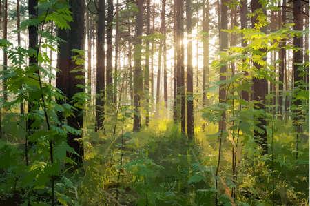 Illustration pour beautiful sunset in the woods - image libre de droit
