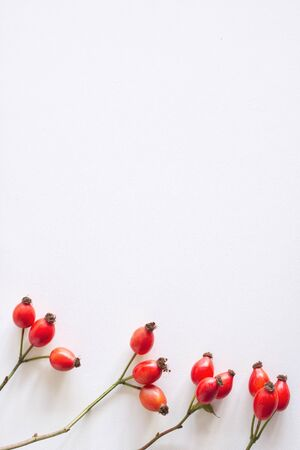 Photo pour Autumn composition with red rose-hips on white table background. Fall, Halloween and Thanksgiving design, flat lay, top view. - image libre de droit