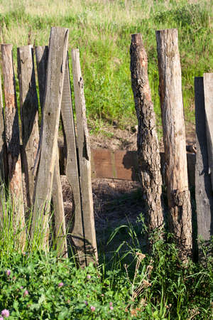 old fence, made of wooden boards, having a defects ,Close-up , growing green grass near a fence