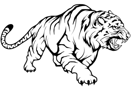 Illustration for tiger vector drawing, tiger drawing sketch in full growth, crouching tiger in black and white, vector graphics to design - Royalty Free Image