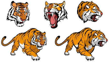 Illustration pour tiger vector set to design - image libre de droit