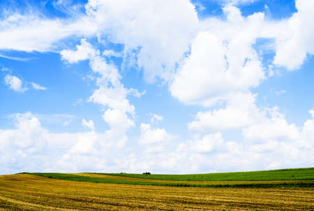 Yellow field with beautiful clouds