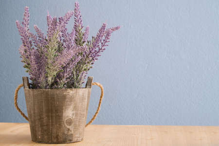 flowerpot with violet lavender on wood floors and blue cement background.