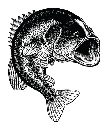 Bass Jumping Vintage is an illustration of a large mouth bass jumping out of the water in a detailed black and white hand-drawn vintage style.