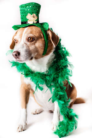Happy St Patrick s Dogs Day