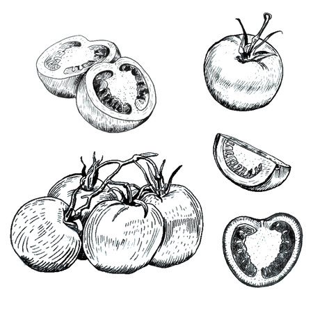 Hand drawn ink tomatoes sketches set. Outline retro style. Isolated