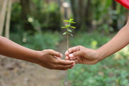 Photo pour children's Hand with green tree, nature care concept - image libre de droit