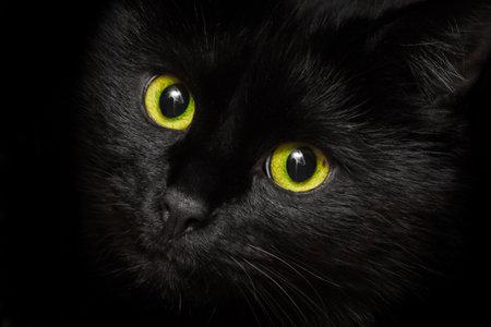 Photo pour Yellow-green eyes of a black cat animal, close up. - image libre de droit