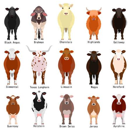 Ilustración de cattle chart with breeds name - Imagen libre de derechos