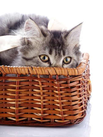 Cat in a wattled basket. Fluffy cat with yellow eyes.  Striped not purebred kitten. Kitten on a white background. Small predator. Small cat.