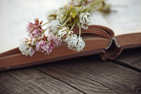 Flowers of a clover lie on the old open book on a wooden table.